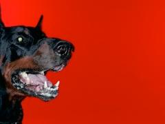 Jouko Lehtola: Koira punaisella taustalla (2004)
